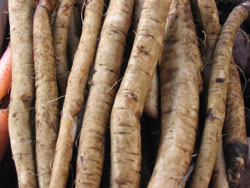Burdock for Food and Medicine
