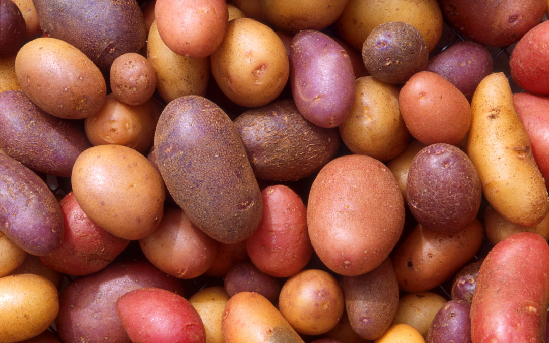 Plentiful Potatoes